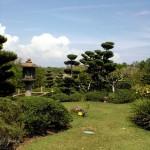 japanese garden grass